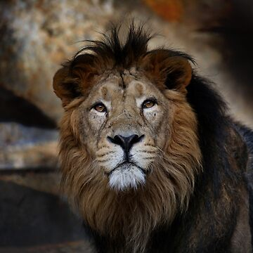 lion - portrait by hottehue