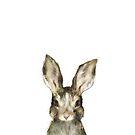 Kleiner Hase von Amy Hamilton