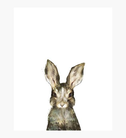 Little Rabbit Photographic Print