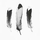 Feathers Sketch von Amy Hamilton