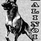 Belgian Malinois are the Best by ceciliamart