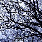 Dark Oak by ECH52