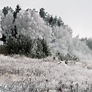 Frosted Landscape by Antanas