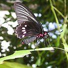 Beautiful Butterfly by mechelle853