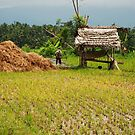 Rice paddy in East Bali by Michael Brewer