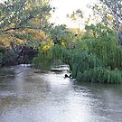 A fork in the Ovens River by Kerry LeBoutillier