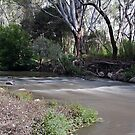 Ovens River rapids by Kerry LeBoutillier
