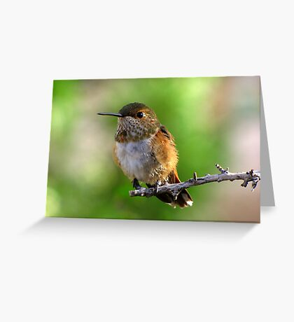Rufous Hummingbird ~ Female Greeting Card