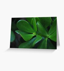 Succulent Leaves Greeting Card