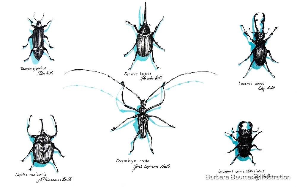 Käfer von Barbara Baumann Illustration