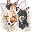 Chihuahua Grouping by BarbBarcikKeith