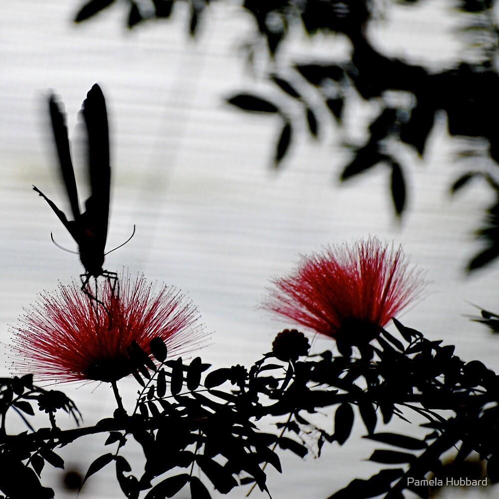 Mimosa by Pamela Hubbard