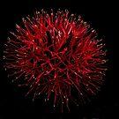 red on black by valandsnake