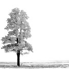 FROSTED TREE by Rodney55
