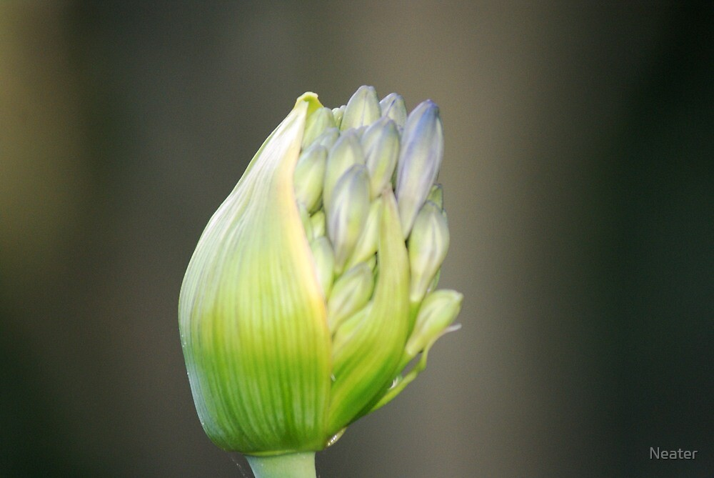 Bud by Neater