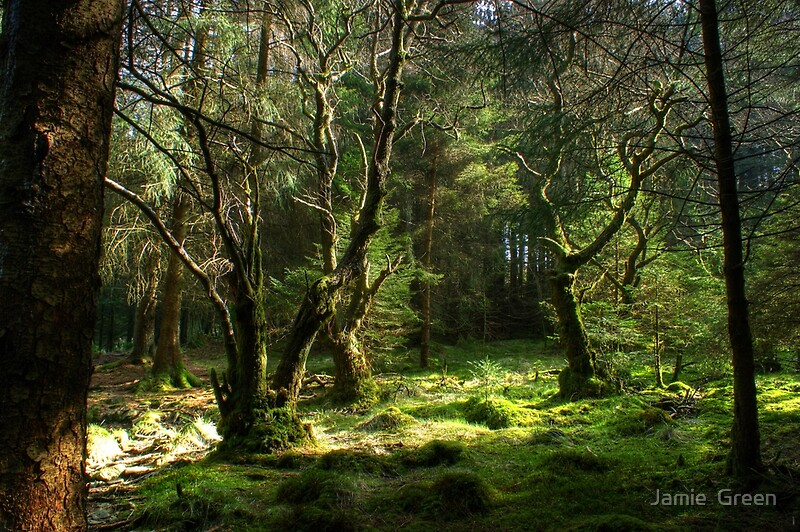 Quot Forest Glade Quot By Jamie Green Redbubble