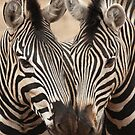 Zebra Hearts by Marie Strydom