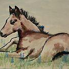 Meadow foal by stepanka