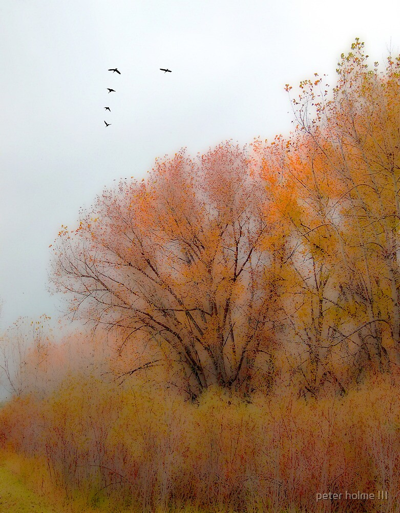 440 by peter holme III