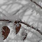 Heavy Frost by rnrphoto98