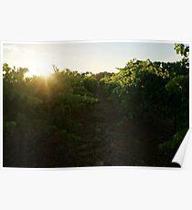 Vines Poster