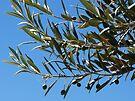 Olives by Emma Holmes