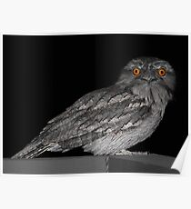 Tawny Frogmouth Poster