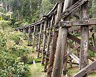 Monbulk Creek Trestle Bridge by Emma Holmes