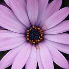 Purple Flower by Emma Holmes