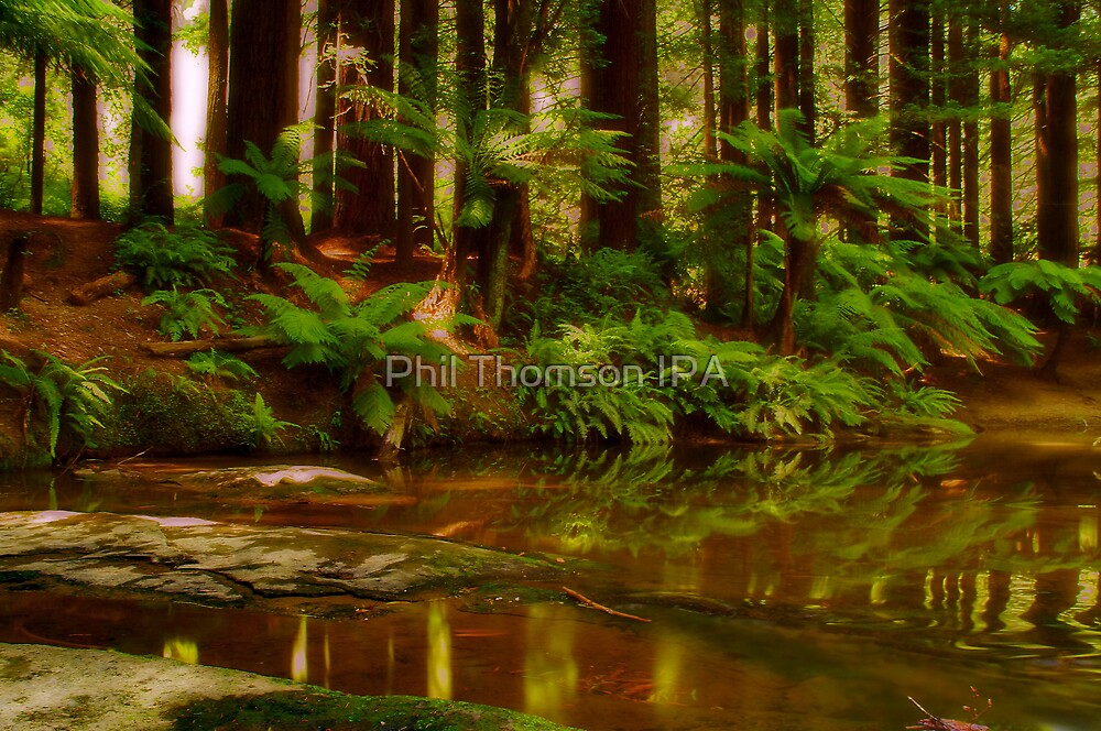 """""""Paradise Reflections"""" by Phil Thomson IPA"""