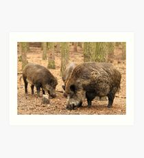 Boar Family Art Print