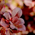 Maroon Leaves by Emma Newman