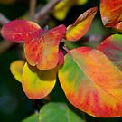 Rounded Coloured Leaves by Emma Newman