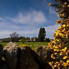 Rural Scotland by bilyana