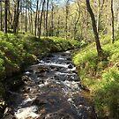 Allt a` Mhangam, Achray Forest by HikerDebs