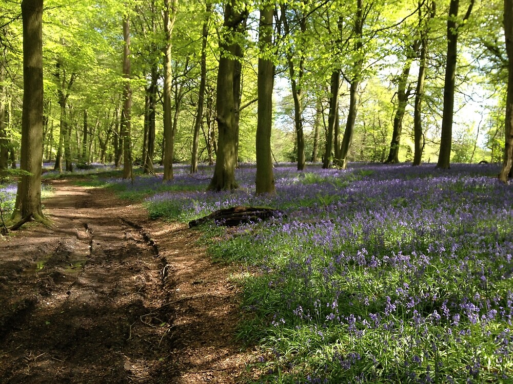 Bluebells in Lower Deans Wood, Oxfordshire by HikerDebs