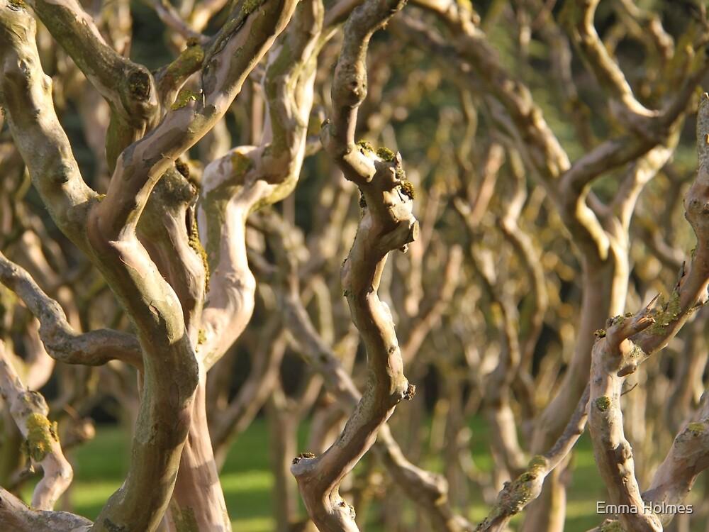 Bare Tree by Emma Holmes