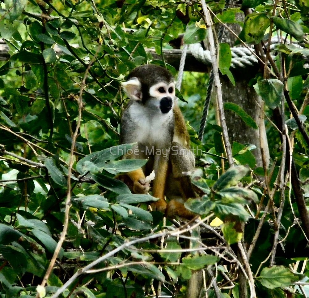 Cheeky Monkey by Chloé-May Smith
