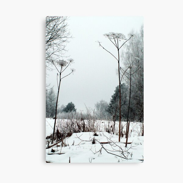 Scenery in winter Canvas Print