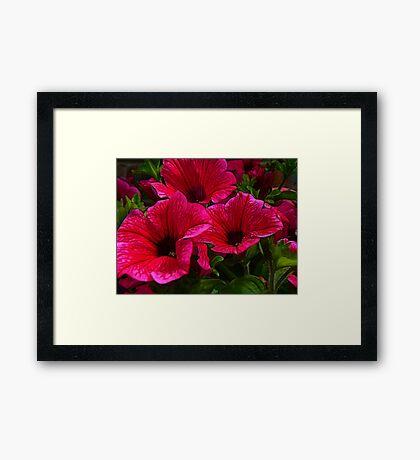 Fractalius Petunias Framed Print
