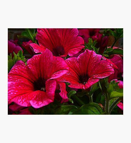 Fractalius Petunias Photographic Print