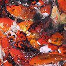 Fish by Sharon Perrett