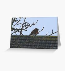 Redwing Greeting Card
