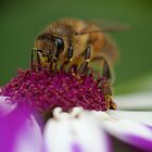 The Very Busy Bee by D-GaP