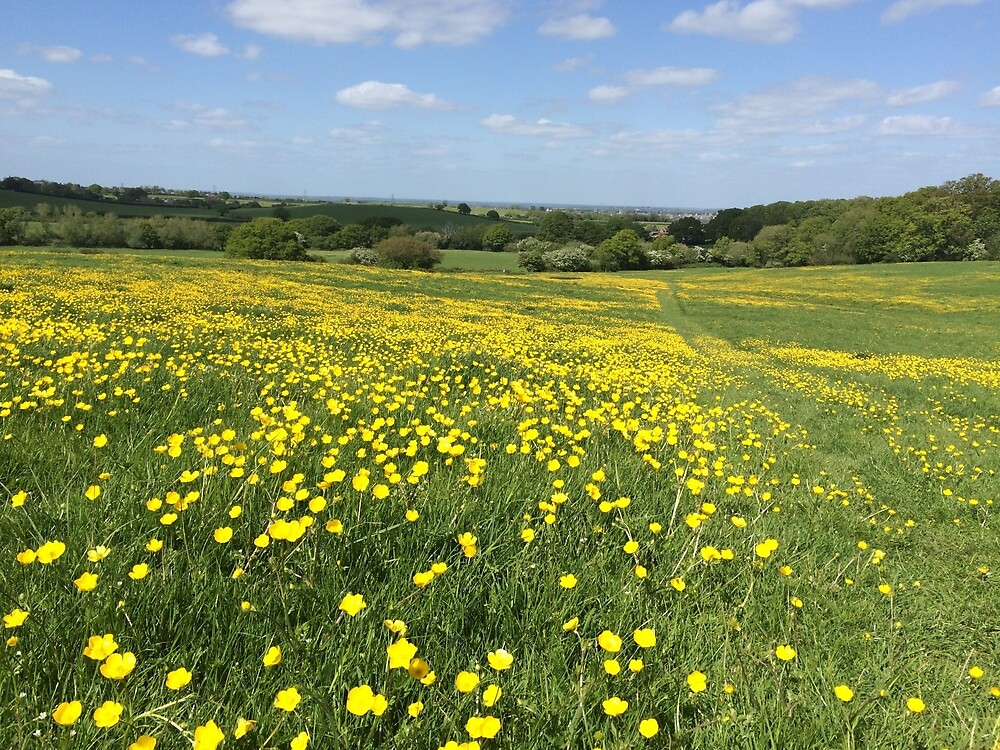 Buttercups Overlooking Oxford by HikerDebs