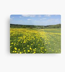 Buttercups Overlooking Oxford Metal Print