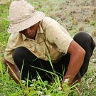 Balinese rice farmer  by Michael Brewer
