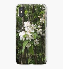 Crab Apple Blossom, Oxfordshire iPhone Case