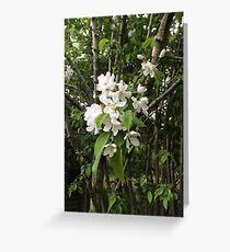 Crab Apple Blossom, Oxfordshire Greeting Card