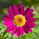 Pink Pollen Explosion by Penny Smith